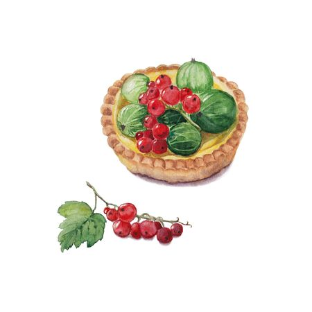 red currant: Original watercolor illustration of berry tartlet with red currant and green gooseberries. bright colors hand drawn painting.