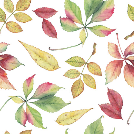 ash tree: Seamless pattern with hand drawn autumn leaves. Original bright colors watercolor background.