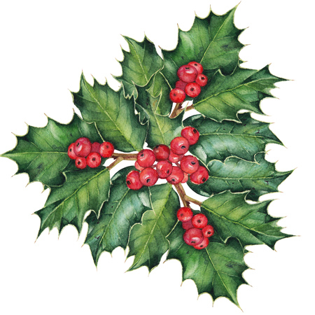 omela: Christmas holly branches. Original watercolor hand drawn pattern. Stock Photo