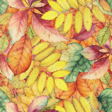 ash tree: Seamless pattern with colorful autumn leaves. Original hand drawn bright colors watercolor background. Stock Photo