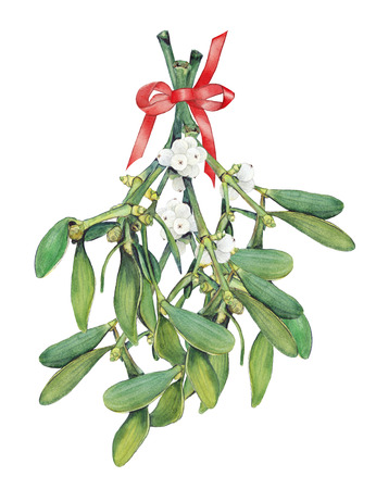 omela: Bouquet with Mistletoe sprigs. Original watercolor painting.