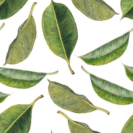 Seamless pattern with green rubber plant leaves. Hand drawn watercolor background. Original painting. Stock Photo