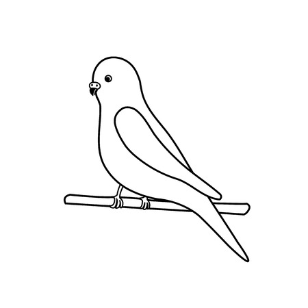 perching: Budgerigar- for exotic bird business