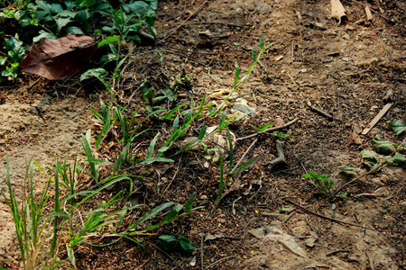 tierra fertil: Hierba en tierra f�rtil Foto de archivo
