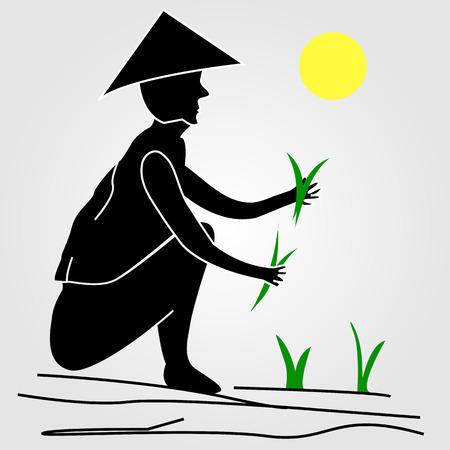 rice fields: A farmer working in rice fields under the sun