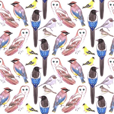 Wild birds watercolor seamless background- Birds of usa