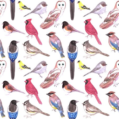 Wild birds watercolor seamless background- Birds of America Standard-Bild