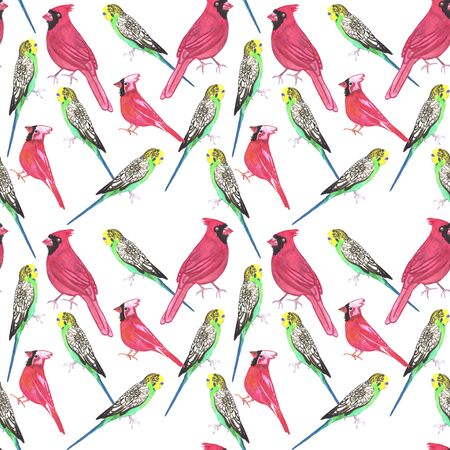 Northern cardinal male and budgies bird seamless watercolor birds painting background Standard-Bild