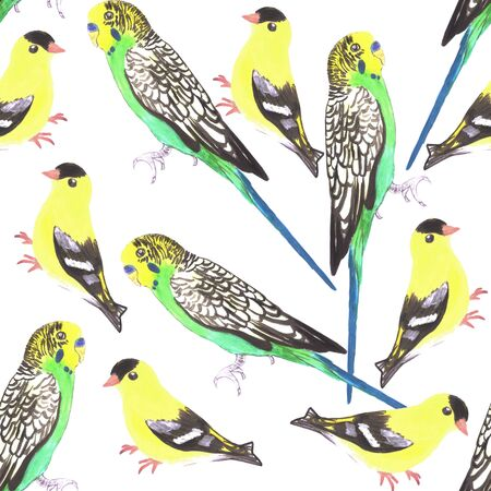 Budgies and american goldfinches seamless watercolor background in vibrant color scheme