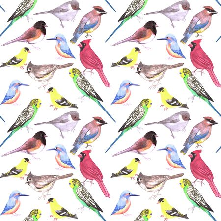 Various birds seamless watercolor background- budgie cardinal goldfinch titmouse kingfisher cedar waxwing juncos on white