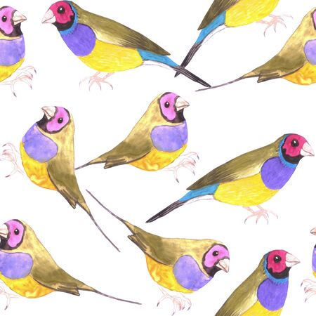 Red headed male Gouldian finch or Erythrura gouldiae bird seamless watercolor birds painting background