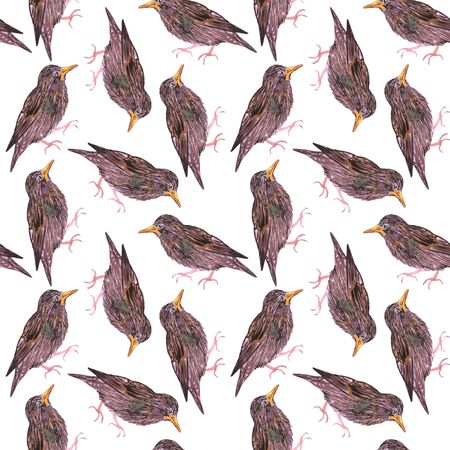 Common starling or European starling or Sturnus vulgaris bird seamless watercolor birds painting background