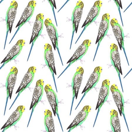 Budgerigar or Melopsittacus undulatus bird seamless watercolor birds painting background
