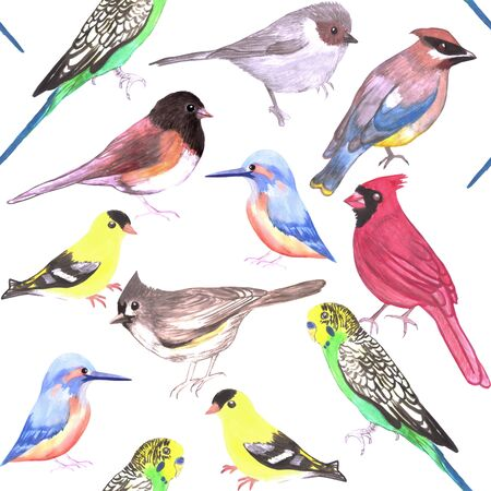 Various birds seamless watercolor background- budgie cardinal goldfinch titmouse kingfisher cedar waxwing juncos Standard-Bild
