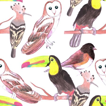 Large birds seamless watercolor background- toucans, juncos, hoopoe and barn owl