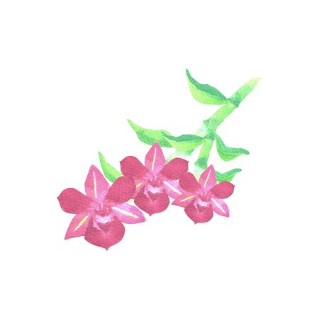 Pink dendrobium orchid with green leaves in watercolor medium