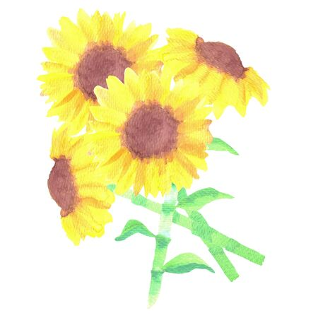 A watercolor sunflower bouquet State flower of the US state of Kansas