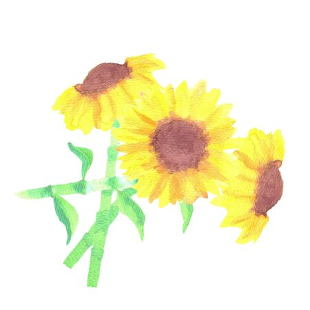 A watercolor sunflower bouquet National flower of Ukraine