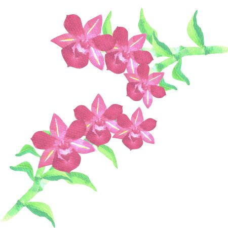 Red dendrobium orchid with green leaves in watercolor medium