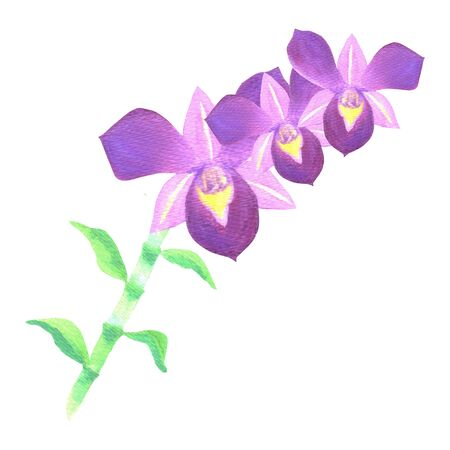 Purple dendrobium orchid stalk with leaves in watercolor medium