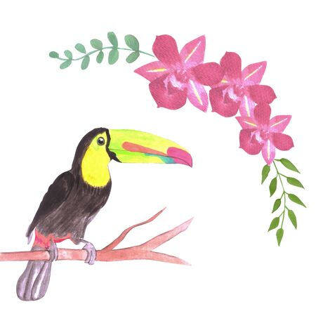 Keel billed Toucan bird or Ramphastidae sulfuratus bird seamless watercolor birds and orchid flowers background