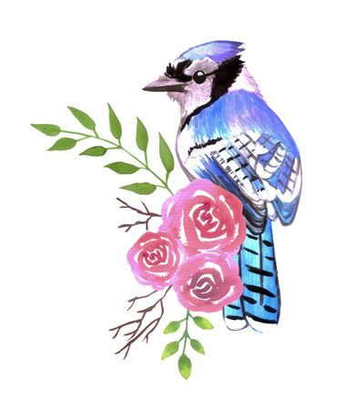 Blue Jay bird with red roses and twigs watercolor birds painting Illustration