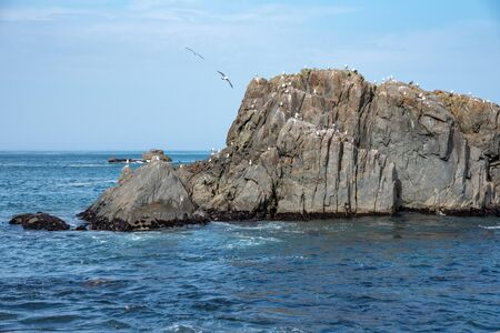 Lots of Seagulls stand on rocks isolated in the ocean, relaxing and flying around the rocks.