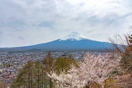 Mount Fuji viewed from behind Chureito Pagoda in full bloom cherry blossoms.