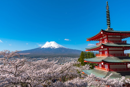 Mount Fuji viewed from behind Chureito Pagoda in full bloom cherry blossoms. Editorial