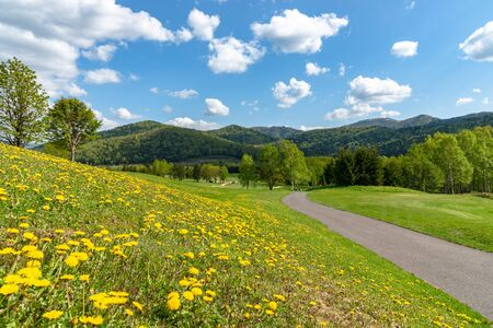 Blue sky and white clouds over rural field in a sunny day in spring time, pathway with small chrysanthemum flower, countryside view with mountains in the background