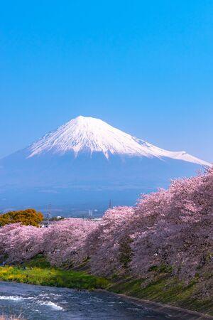 Ryuganbuchi in Fuji city, Shizuoka prefecture is one of the popular cherry blossom & Mt.Fuji viewing spot.