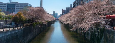 Meguro Sakura Festival. Cherry blossom full bloom in spring season at Meguro river, Tokyo, Japan. Many visitors to Japan choose to travel in cherry blossom season.
