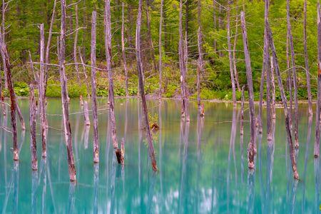 Blue pond (Aoiike) with reflection of tree in summer, located near Shirogane Onsen in Biei Town, Hokkaido, Japan Banco de Imagens