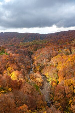 Autumn foliage scenery view. Colorful forest trees in the foreground, and sky in the background