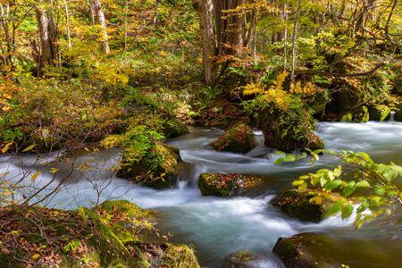Arroyo Oirase en día soleado, río que fluye, hojas caídas, rocas cubiertas de musgo en el Parque Nacional Towada Hachimantai, Aomori, Japón.