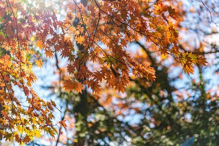 Beautiful Autumn landscape background. Colorful fall foliage in sunny day