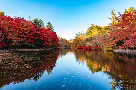 Kumobaike Pond autumn foliage scenery view, multicolor reflecting on surface in sunny day. Colorful trees with red, orange, yellow, golden colors around the park Karui inzawa, Nagano Prefecture, Japan