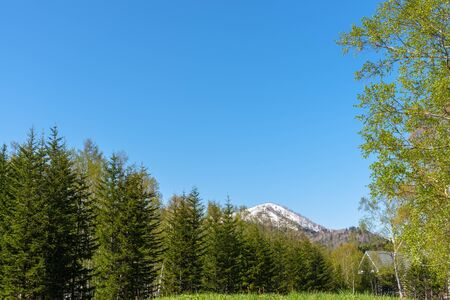 Row of trees on foreground mountains with vast blue sky on background in sunny day in summer time. Nature landscape, beautiful scenic countryside view