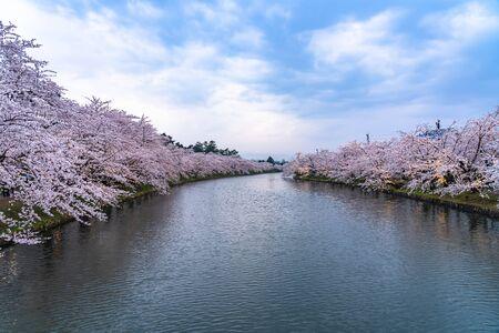 Hirosaki Park Cherry Blossoms Matsuri Festival in Springtime Season Beautiful Morning Day. Beauty full bloom pink sakura flowers at west moat. Aomori Reflection Region, Japan