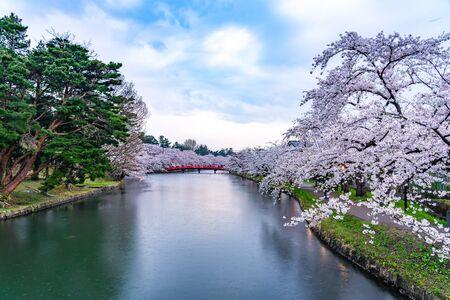 Hirosaki Park Cherry Blossoms Matsuri Festival in Springtime Season. Beauty full bloom pink sakura flowers around Shunyo-bashi Bridge in west moat. Aomori Reflection Region, Japan