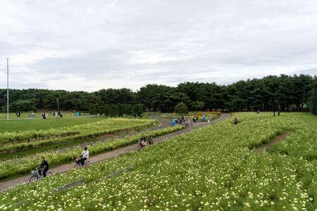 Tourists walking and cycling in the Hitachi Seaside Park. Ibaraki Prefecture, Japan. Stock fotó - 151309035