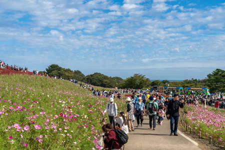 Crowded people going to the Miharashi Hill to see the red kochia bushes in the Hitachi Seaside Park. Kochia Carnival. Ibaraki Prefecture, Japan. Stock fotó - 151309018