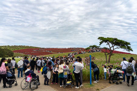 Crowded people going to the Miharashi Hill to see the red kochia bushes in the Hitachi Seaside Park. Kochia Carnival. Ibaraki Prefecture, Japan. Stock fotó - 151309019