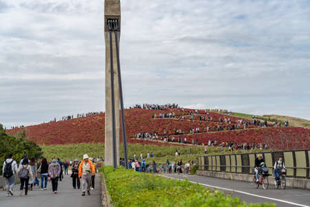 Crowded people going to the Miharashi Hill to see the red kochia bushes in the Hitachi Seaside Park. Kochia Carnival. Ibaraki Prefecture, Japan. Stock fotó - 151309004