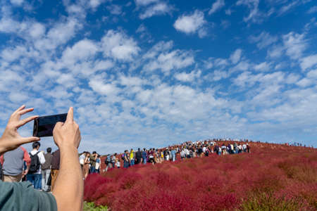 Tourists taking pictures on the Miharashi Hill in the Hitachi Seaside Park during the Red Kochia Carnival. Ibaraki Prefecture, Japan.
