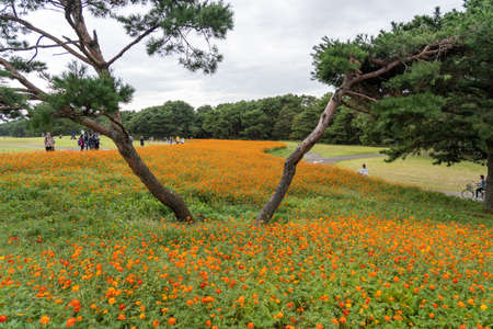 Tourists walking and cycling in the Hitachi Seaside Park. Ibaraki Prefecture, Japan. 報道画像