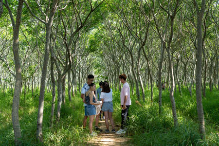 Sapindus forest, popular local photo spots in Taichung city. Houli District, Taichung city, Taiwan 報道画像