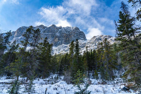 Forest scenery in early winter, green pine trees in the foreground, snow capped mountains with frozen trees in background. Landscape in Grassi Lakes Trail, Canmore, Alberta, Canada.