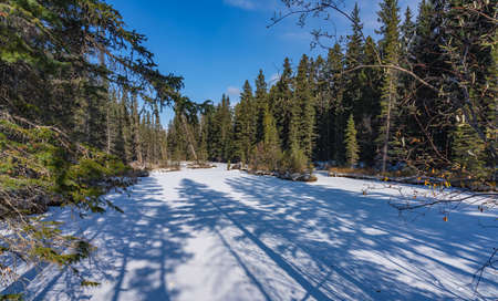 Pine trees cast shadow on a frozen stream covered with snow in the forest in early winter season sunny day morning.
