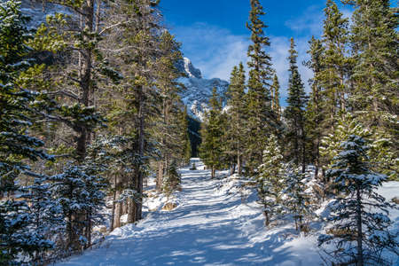 Mountain path covered by snow in the forest in winter season sunny day morning. Grassi Lakes Trail, Canmore, Alberta, Canada.